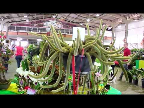 Exposição Sul Brasileira de Orquídeas e Plantas Ornamentais