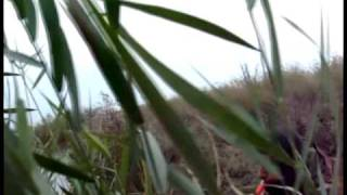 getlinkyoutube.com-Duck Hunting with T&T Duck and Goose Calls in Pomorie, Bulgaria
