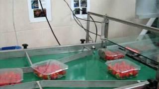getlinkyoutube.com-KLA Tray Sealer Line - Strawberries