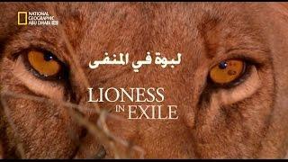 getlinkyoutube.com-Lioness in exile - لبوة في المنفى