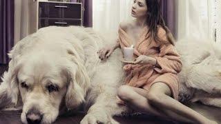 getlinkyoutube.com-World's BIGGEST DOGS EVER!