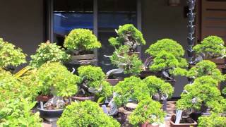 getlinkyoutube.com-Bonsai Scenes Japan 3