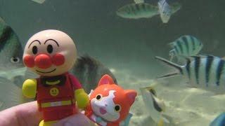 getlinkyoutube.com-ジバニャン アンパンマン おもちゃ 水あそび 海水浴 お魚 バイキンマン♡ぴよこおねえさん♡