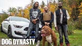 World's Biggest Pitbull Hulk Stars In Rap Video | DOG DYNASTY