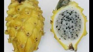 getlinkyoutube.com-Como Cultivar Pitaya (Fruta Dragón) - TvAgro por Juan Gonzalo Angel