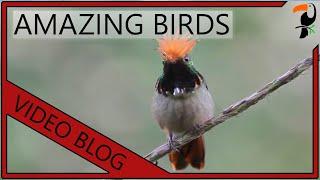 getlinkyoutube.com-Amazing Birds - Tropical Birds Video