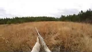 getlinkyoutube.com-deer hunting with dogs