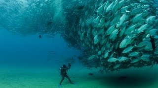 getlinkyoutube.com-TUNA TORNADO - Huge Swarm of Jack Fish Dwarf Scuba Diver