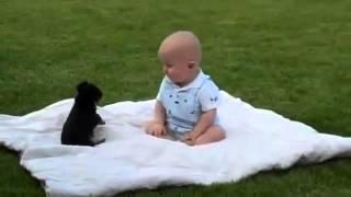 getlinkyoutube.com-Lucha entre perro y bebe!!! Adivinen quien gana!