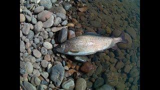 рыбалка форели в хакасии