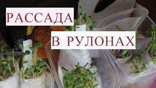 Метод Керимова. Посев семян в рулоны на рассаду. Сеем бархатцы