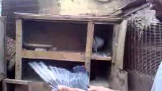 getlinkyoutube.com-جنات الطيور في العراق.3gp