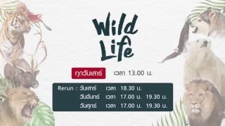 Promo Wildlife SS.1