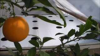 getlinkyoutube.com-How to Build Grow Raft Hydroponics System (No Air Pump)