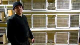 getlinkyoutube.com-клетки для кроликов своими руками-3