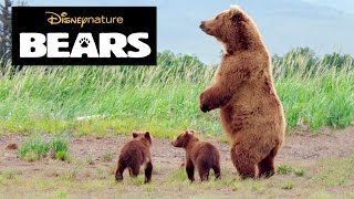 Disneynature Bears | Brown Bear Facts