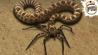 getlinkyoutube.com-10 Crazy Animal Hybrids That Actually Exist