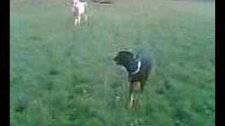 getlinkyoutube.com-Horse kicks dog