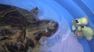 "getlinkyoutube.com-LITTLEST PET SHOP. TORTUGAS AL RESCATE. ""Turtle rescue"""