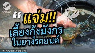getlinkyoutube.com-เลี้ยงกุ้งมังกรในยางรถยนต์