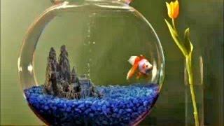 getlinkyoutube.com-Goldfish Aquarium 2.0 screensaver