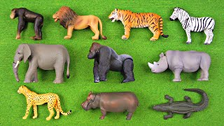 getlinkyoutube.com-Learning Animal Names & Fun Facts #1 - African Animals, Safari Animals for Kids - Organic Learning