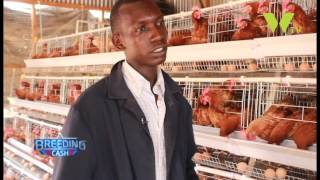 getlinkyoutube.com-BREEDING CASH; POULTRY FARMING USING BATTERY CAGES