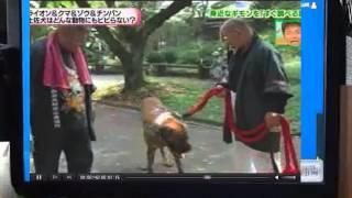 getlinkyoutube.com-土佐犬vsライオン