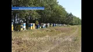 getlinkyoutube.com-4 тонны мёда отправят на экспорт с Красноармейской пасеки