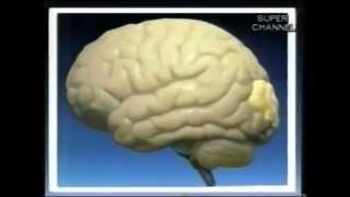 getlinkyoutube.com-How does an electroencephalograph (EEG) work?