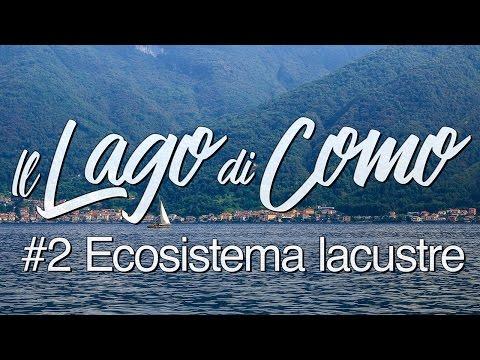 Il Lago di Como #2 - Ecosistema lacustre