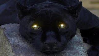 10 من أخطر وأشرس الحيوانات على سطح الأرض !!