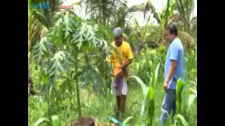 getlinkyoutube.com-เกษตรกรสงขลาปลูกพืชสวนในกระถางติดแอร์ แก้ปัญหาชุ่มน้ำได้แถมให้ลูกดก