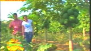 getlinkyoutube.com-RED LADY PAPAYA Kumikitang Kabuhayan
