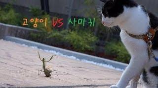 getlinkyoutube.com-고양이 vs 사마귀 Cat vs Mantis