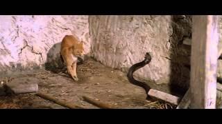 getlinkyoutube.com-Cat Fight With Cobra (catfight)