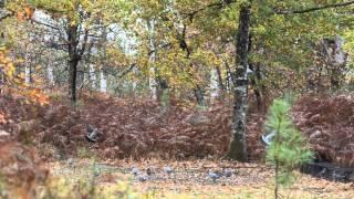 getlinkyoutube.com-chasse palombes au filet dans les Landes