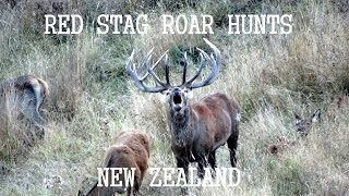 "getlinkyoutube.com-New Zealand Hunting Red Stag Hunting ""The Roar"" Part 2 2013."