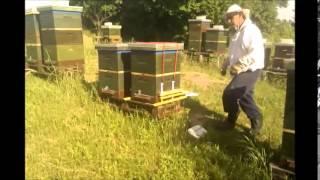 getlinkyoutube.com-Digitalna pčelarska vaga