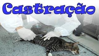 getlinkyoutube.com-Castração de gatos. #44