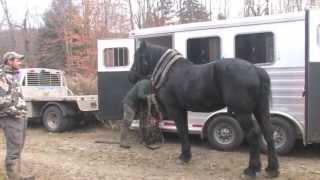 getlinkyoutube.com-Vermont Moose Hunt 2012