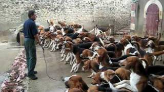getlinkyoutube.com-Crazy feeding frenzy with the hounds at Chateau Cheverny