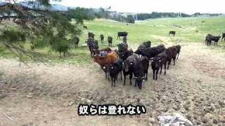 getlinkyoutube.com-福島第一原発20km圏内に残された動物たち