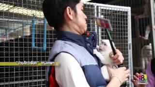 getlinkyoutube.com-อึ้ง ทึ่ง เสียว : บ้านสัตว์เผือก พิพิธภัณฑ์โชคชัย 1/4