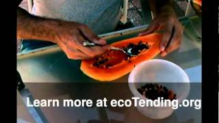 getlinkyoutube.com-Growing Papaya Trees with ecoTending.org