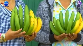 getlinkyoutube.com-เกษตรทำเงิน : ปลูกกล้วยหอมทอง จ.เชียงใหม่ กำไร 3 หมื่น/ไร่