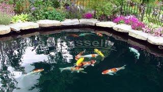 getlinkyoutube.com-How to Build a Bubbless Koi Pond Time Lapse