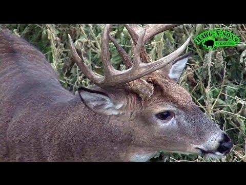 Rattle & Decoy Hunting Whitetail Bucks - Self-Filmed November 2
