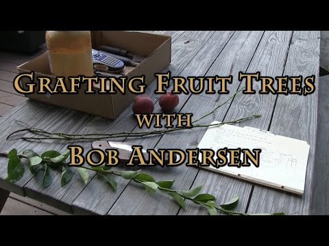 Grafting Fruit Trees with Bob Andersen