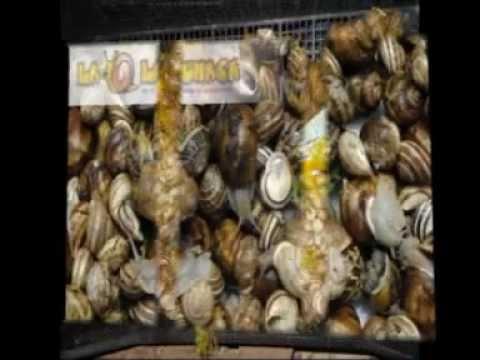 Lumache e chiocciole a Tobia (Viterbo). Az. Agricola La Lumaca- allevamento di lumache